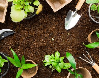 Why You Should Start Gardening